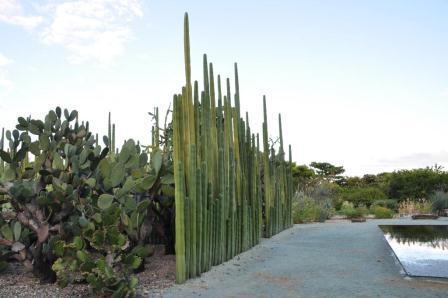 Le Jardin ethnobotanique de Oaxaca